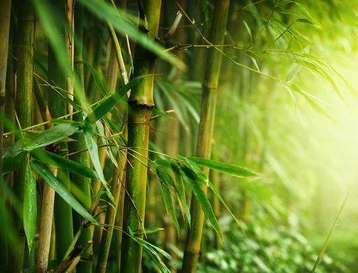 Aroma Bamboo