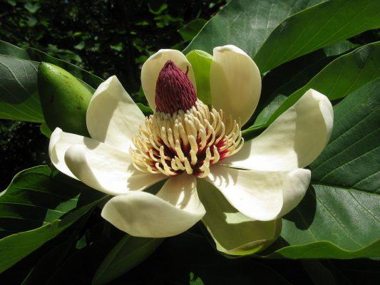 Fragrância Flor de Figo